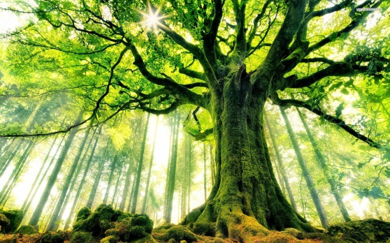 nature_big_tree_hd